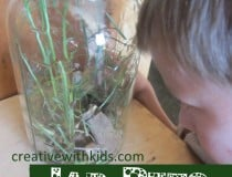 Keeping Jar Pets - summer nature activity