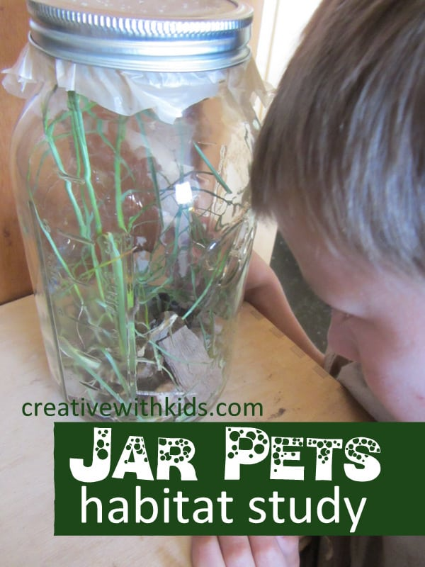 Keeping Jar Pets - summer nature activity