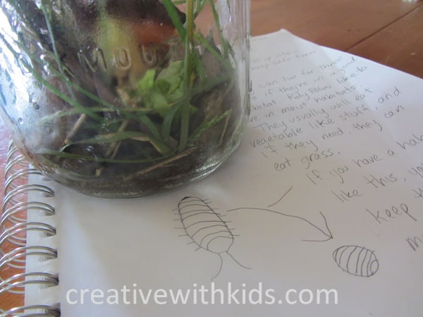 Keeping Jar Pets - summer nature activity (2)