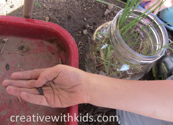 Keeping Jar Pets - summer nature activity (3)